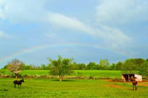 rainbow over farm